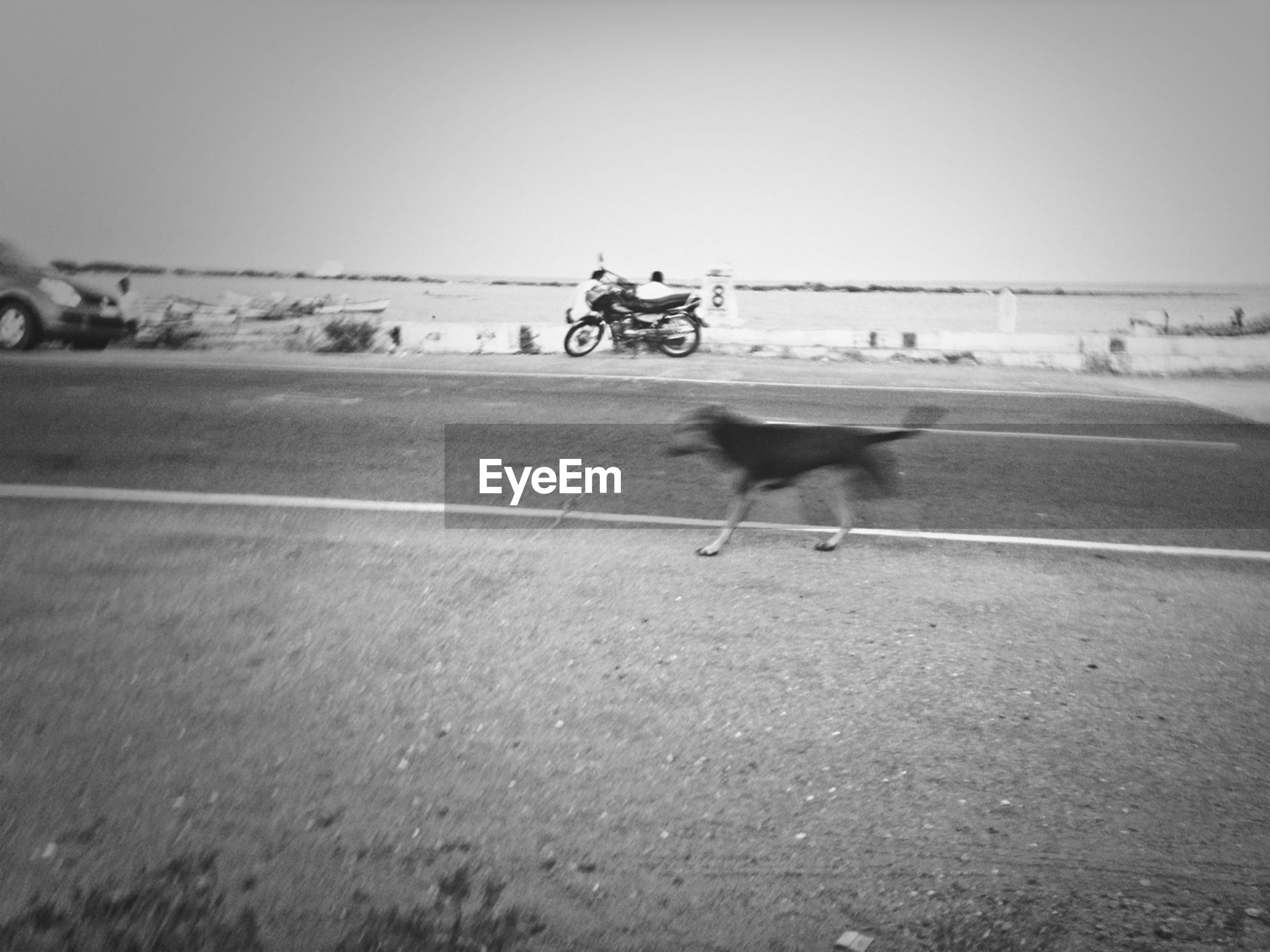 animal themes, one animal, clear sky, bicycle, transportation, domestic animals, copy space, full length, dog, road, riding, land vehicle, pets, mammal, mode of transport, street, running, walking, on the move, animals in the wild