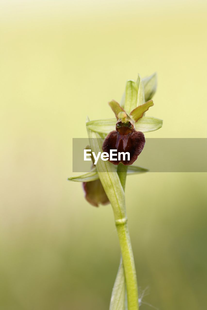plant, growth, close-up, flower, beauty in nature, flowering plant, fragility, vulnerability, beginnings, green color, no people, new life, bud, freshness, nature, focus on foreground, plant stem, day, plant part, leaf, outdoors, sepal, flower head