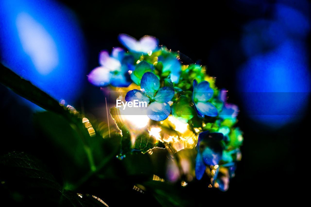 illuminated, close-up, selective focus, night, blue, no people, plant, lighting equipment, nature, glowing, focus on foreground, indoors, light - natural phenomenon, green color, flowering plant, growth, beauty in nature, flower, light