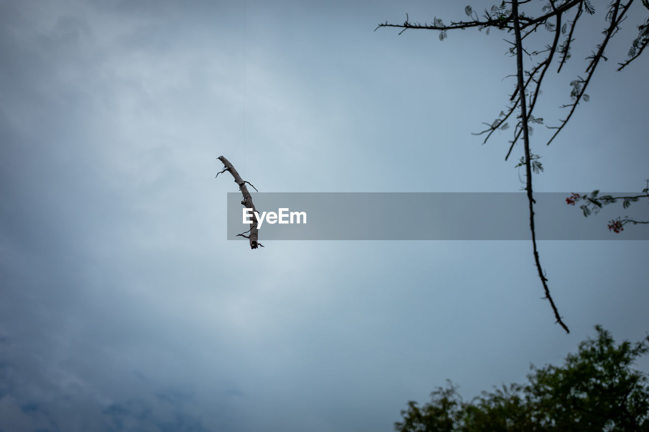 low angle view, sky, cloud - sky, flying, tree, plant, bird, animals in the wild, animal wildlife, mid-air, nature, vertebrate, animal themes, no people, animal, day, spread wings, beauty in nature, outdoors, branch, plane