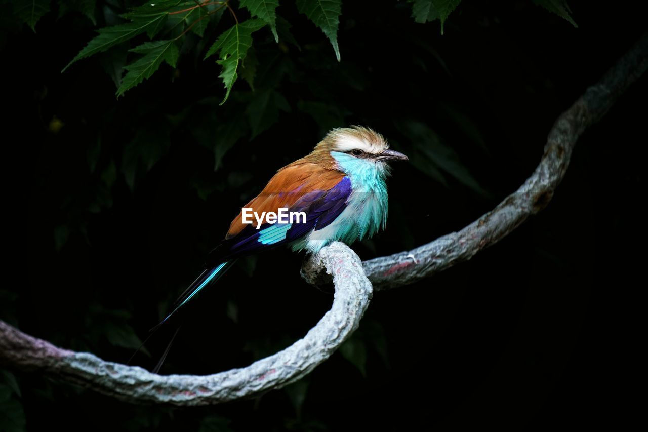 Close- Up Of BIRD PERCHING ON BRANCH