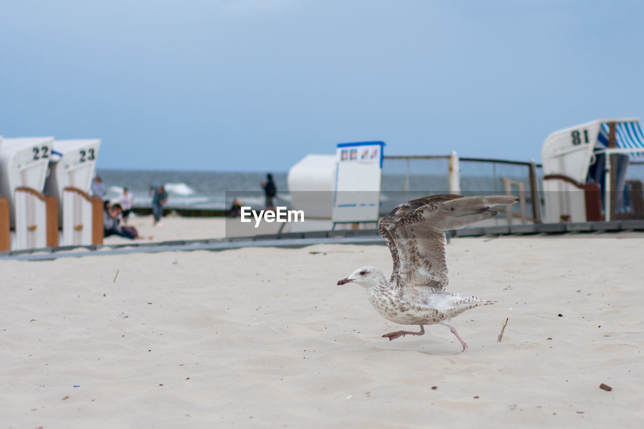 VIEW OF SEAGULL ON BEACH AGAINST SKY