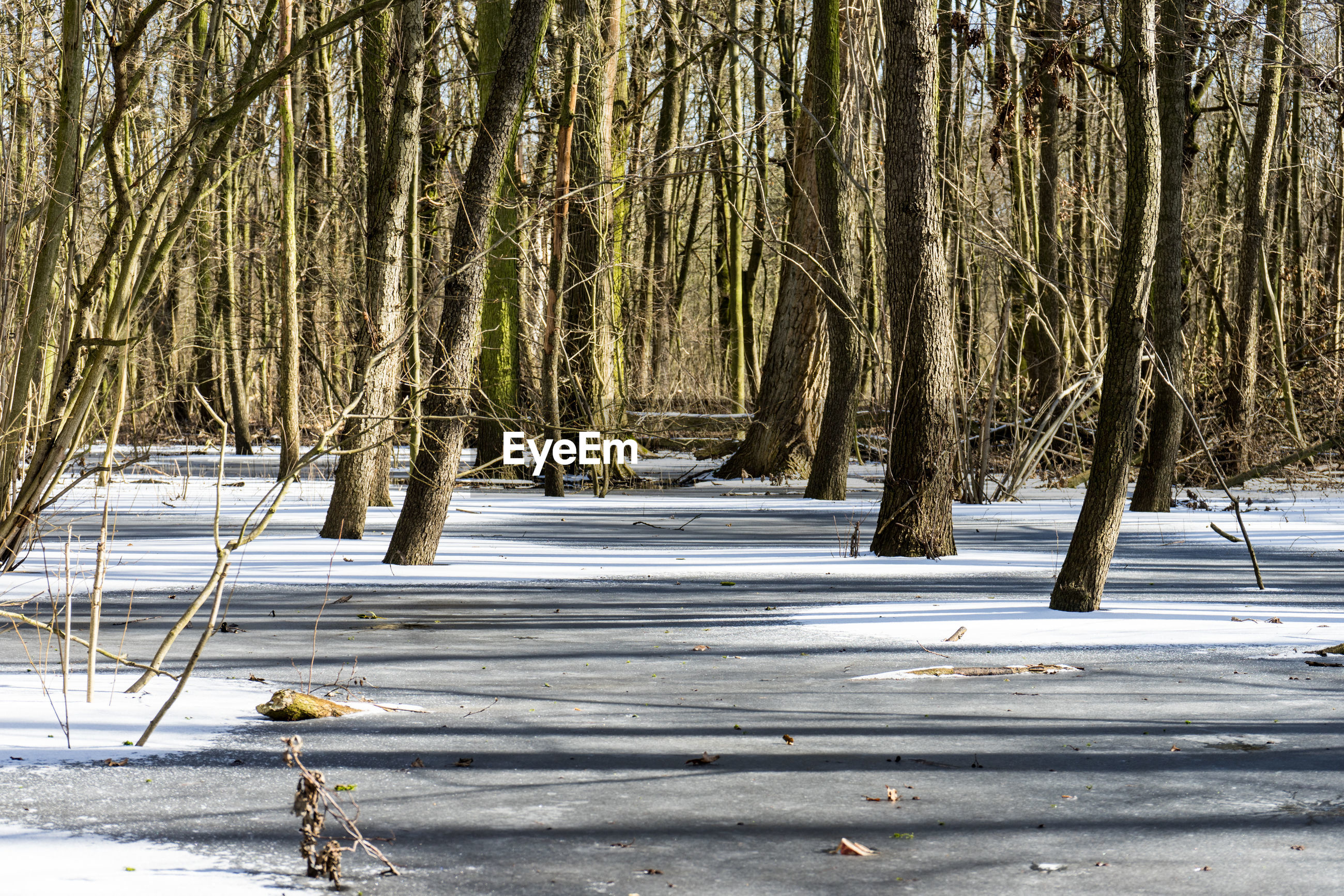 snow, winter, cold temperature, nature, tree, tranquility, cold, tranquil scene, outdoors, beauty in nature, no people, frozen, scenics, landscape, day, branch