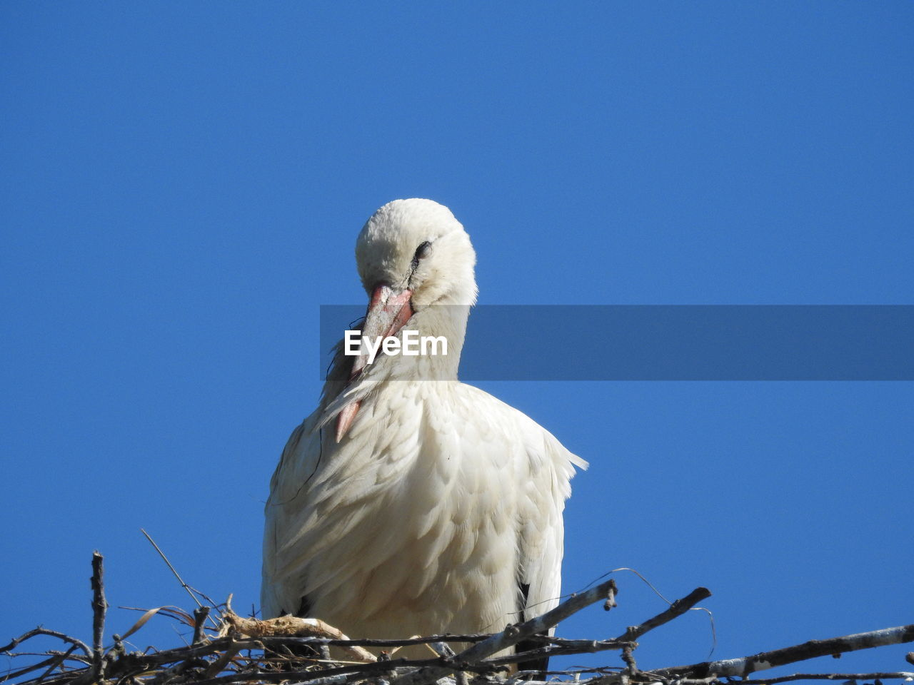 bird, sky, animal themes, vertebrate, animal, animals in the wild, clear sky, low angle view, animal wildlife, copy space, nature, one animal, white color, blue, no people, day, perching, outdoors, sunlight, close-up