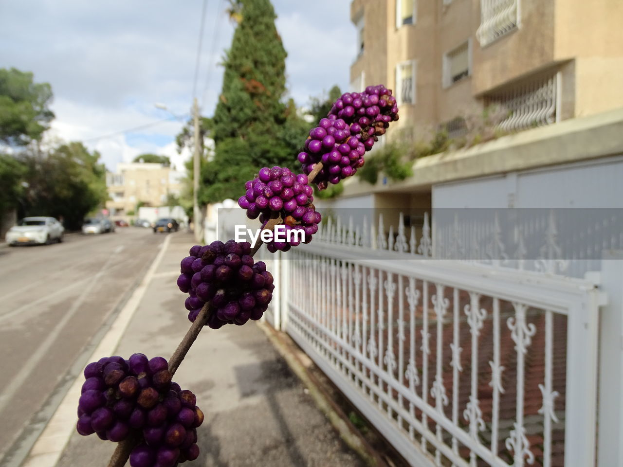 freshness, plant, flower, flowering plant, focus on foreground, nature, architecture, building exterior, day, food and drink, fruit, built structure, healthy eating, no people, transportation, food, close-up, city, outdoors, wellbeing, purple, flower arrangement, bouquet