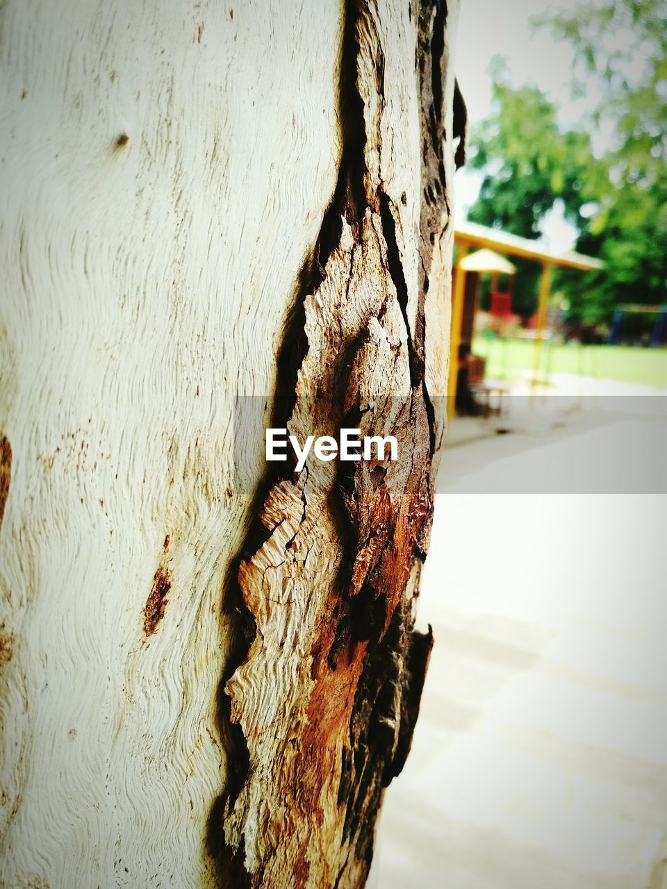 tree trunk, tree, textured, wood - material, close-up, rough, day, focus on foreground, no people, outdoors, bark, built structure, nature