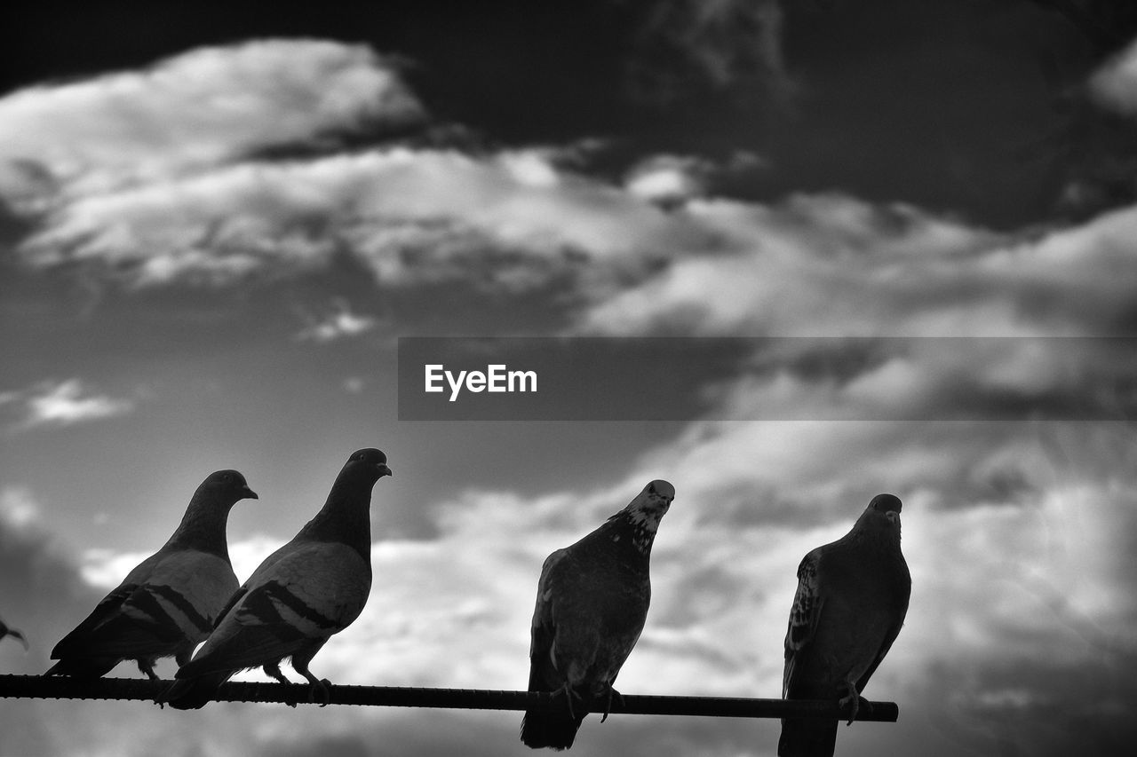 Low angle view of birds perching against sky