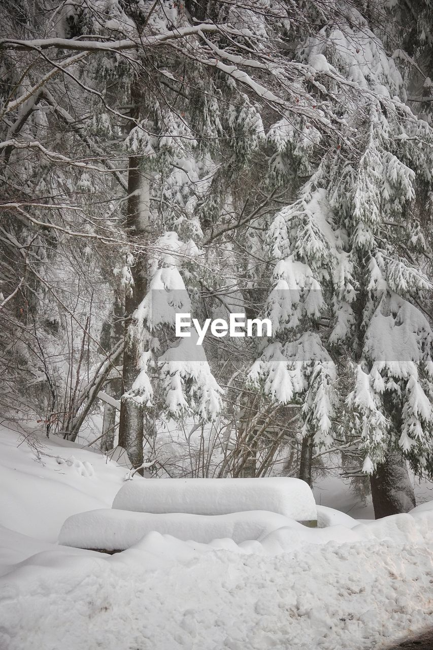 snow, winter, cold temperature, tree, covering, plant, land, white color, beauty in nature, nature, no people, frozen, tranquility, day, field, scenics - nature, environment, tranquil scene, forest, outdoors, extreme weather, snowing, snowcapped mountain