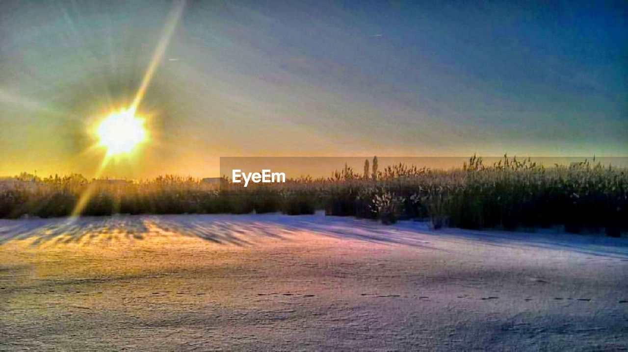 sky, snow, cold temperature, sun, plant, beauty in nature, tranquil scene, sunlight, winter, tranquility, tree, nature, sunbeam, sunset, scenics - nature, lens flare, landscape, no people, environment, outdoors, bright
