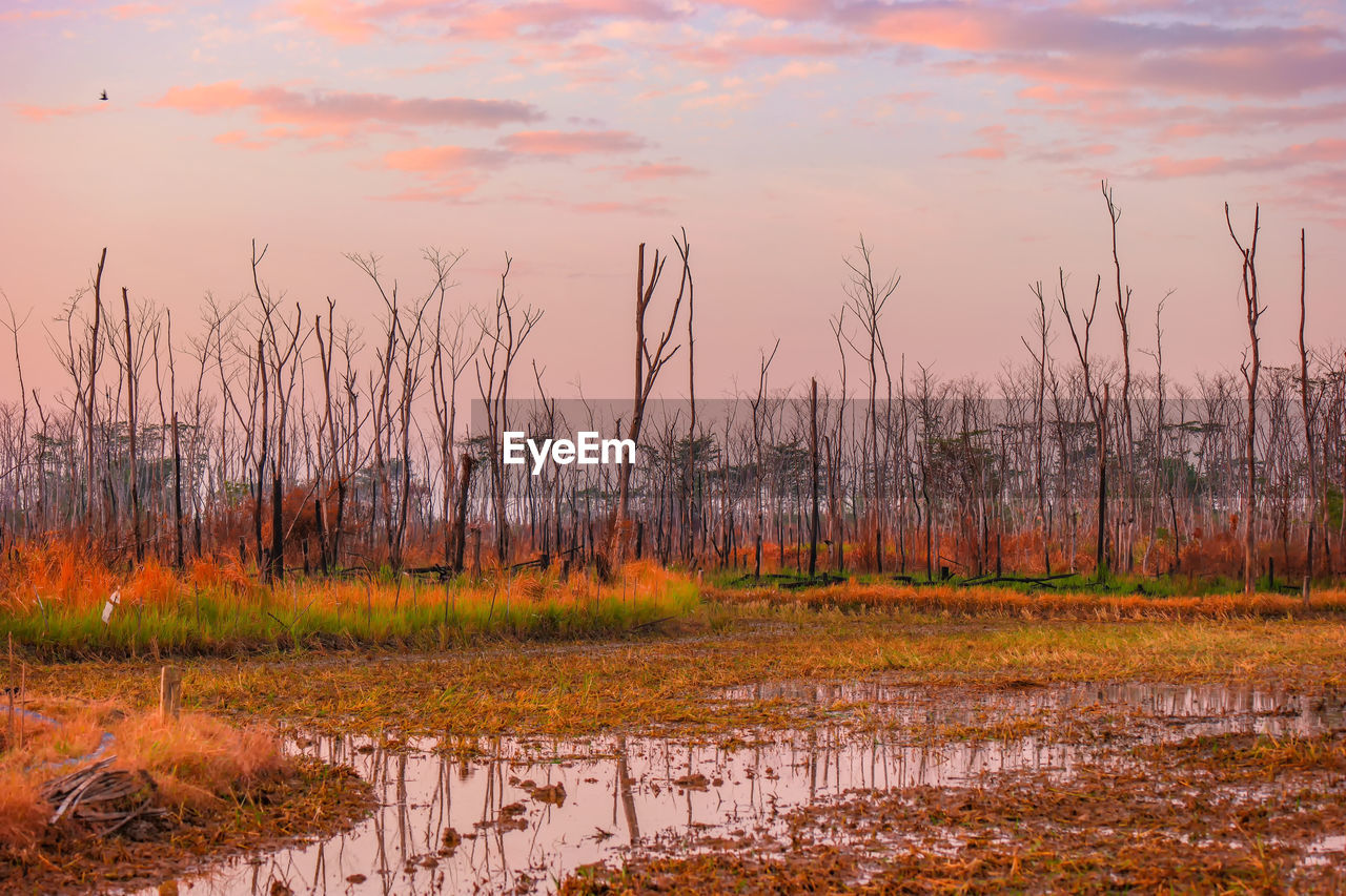sky, orange color, water, sunset, plant, no people, tranquility, beauty in nature, nature, cloud - sky, tranquil scene, scenics - nature, land, non-urban scene, grass, environment, outdoors, growth, lake, swamp