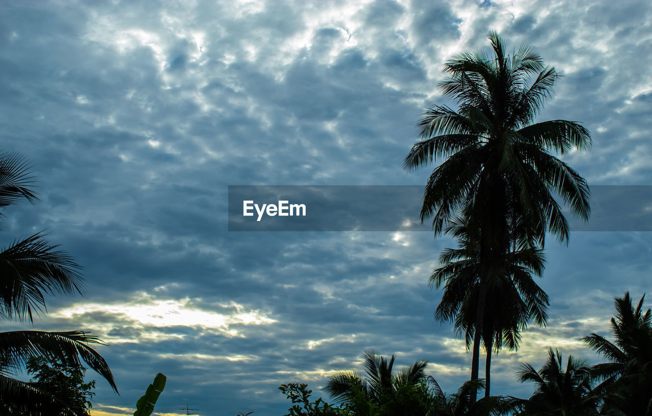 cloud - sky, tropical climate, sky, palm tree, tree, plant, growth, beauty in nature, low angle view, nature, leaf, no people, scenics - nature, tranquility, silhouette, sunset, palm leaf, outdoors, tranquil scene, coconut palm tree, tropical tree