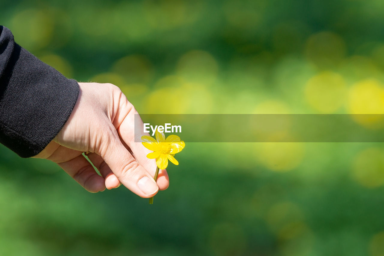 CLOSE-UP OF HAND HOLDING YELLOW FLOWERING PLANTS