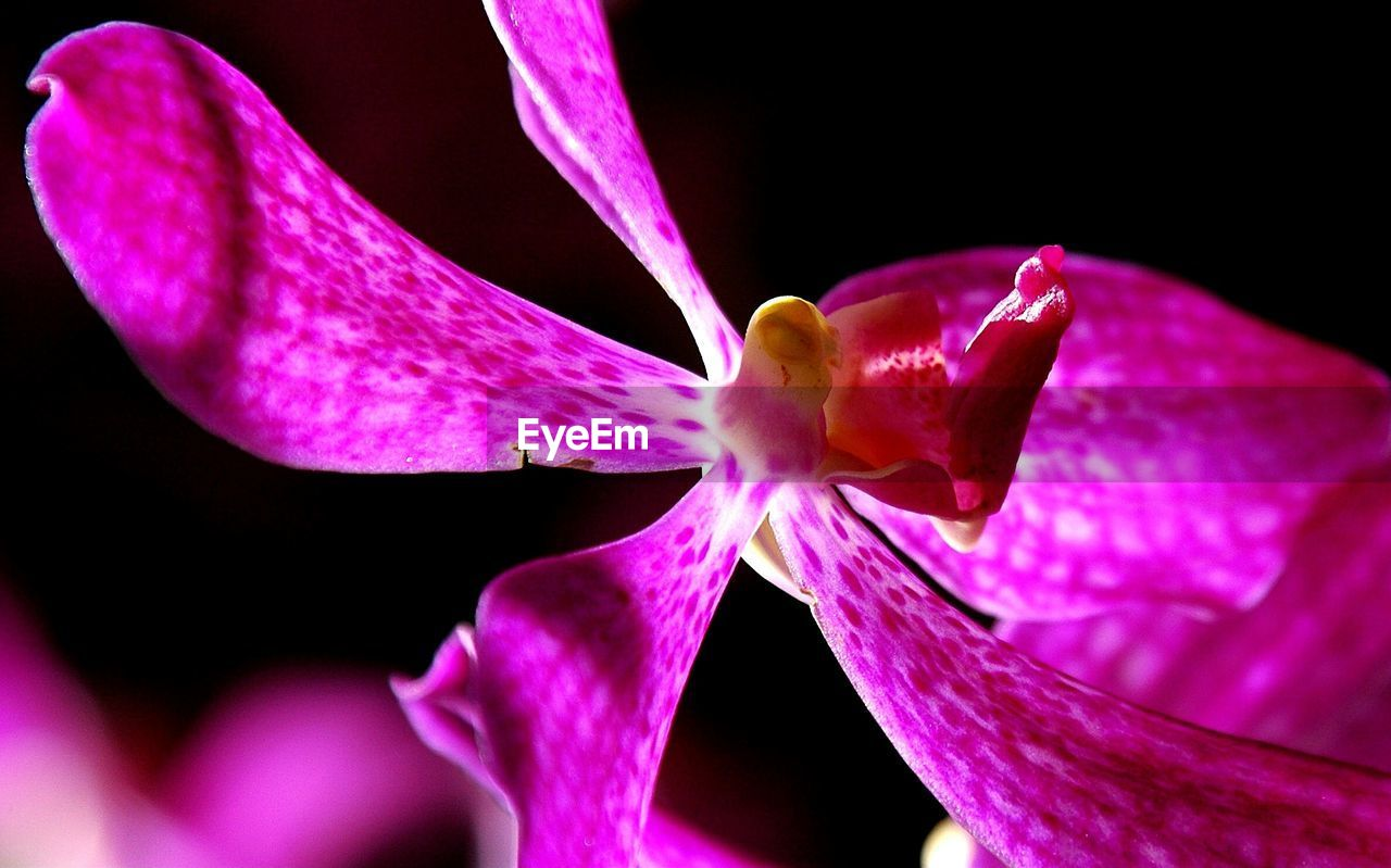 petal, flower, fragility, flower head, growth, beauty in nature, close-up, stamen, freshness, pink color, nature, no people, blooming, outdoors, day, day lily