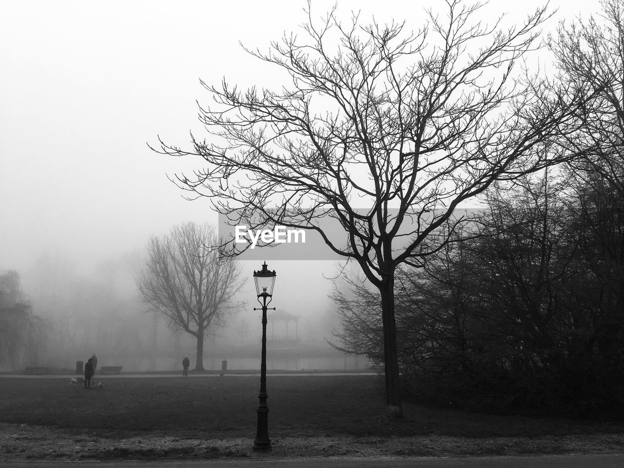 BARE TREE BY STREET AGAINST SKY DURING FOGGY WEATHER