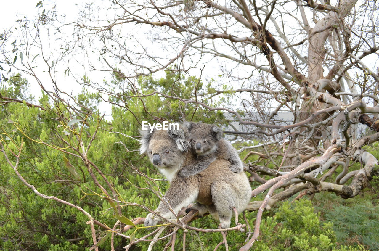 tree, plant, animals in the wild, animal wildlife, mammal, branch, vertebrate, nature, no people, group of animals, two animals, forest, day, outdoors, land, young animal, animal family