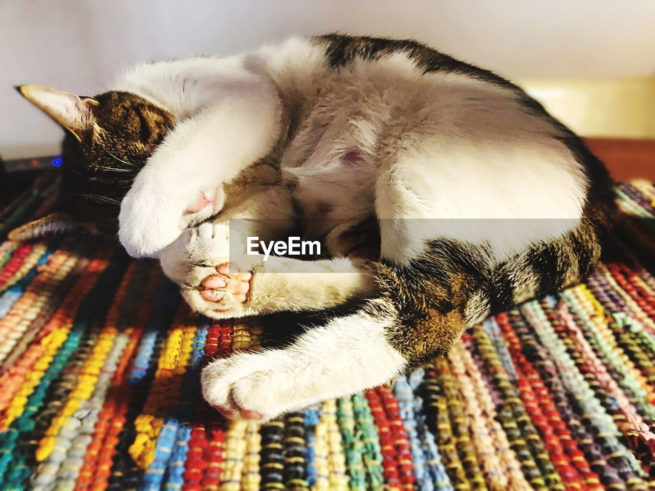 domestic, pets, domestic animals, mammal, domestic cat, relaxation, animal themes, cat, animal, one animal, sleeping, vertebrate, feline, indoors, resting, eyes closed, furniture, lying down, no people, home interior, whisker, napping, tabby