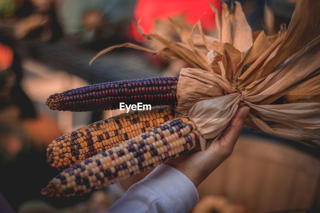Close-up of hand holding corns