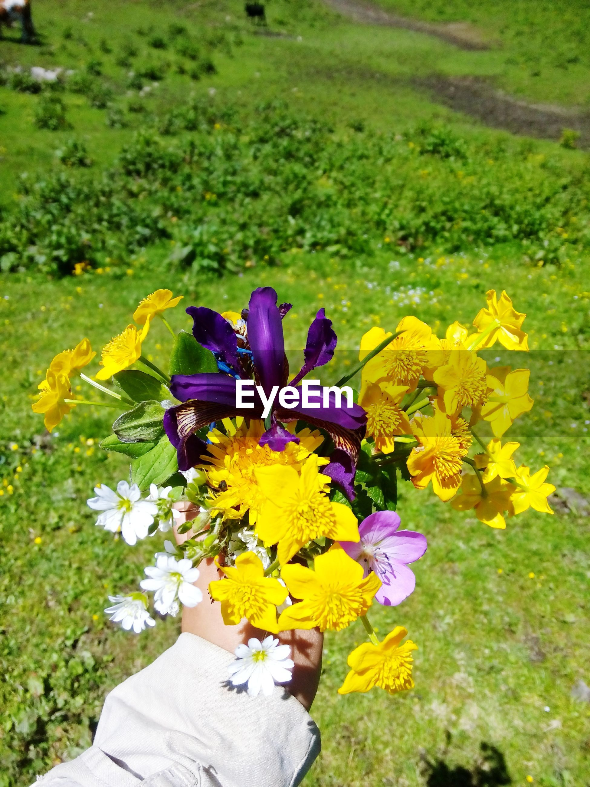 flower, petal, freshness, fragility, beauty in nature, yellow, flower head, growth, high angle view, nature, blooming, field, plant, purple, leaf, in bloom, green color, day, outdoors, blossom