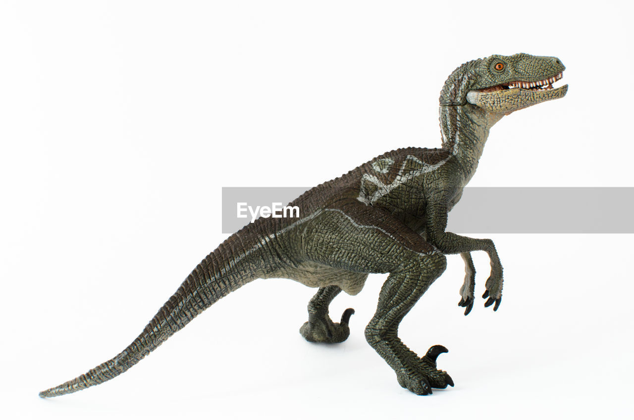 studio shot, reptile, animal, animal themes, white background, one animal, lizard, indoors, vertebrate, animal representation, copy space, no people, animal wildlife, cut out, representation, dinosaur, close-up, side view, extinct, art and craft, iguana