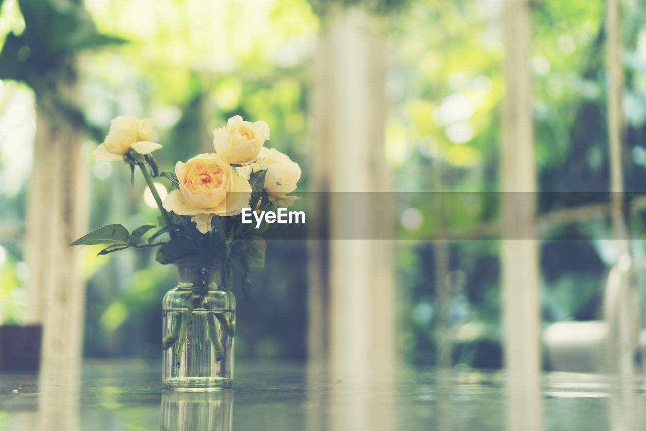 plant, flower, flowering plant, beauty in nature, vulnerability, nature, fragility, freshness, glass - material, vase, focus on foreground, close-up, water, no people, transparent, day, petal, table, flower head, outdoors, flower arrangement, glass, softness
