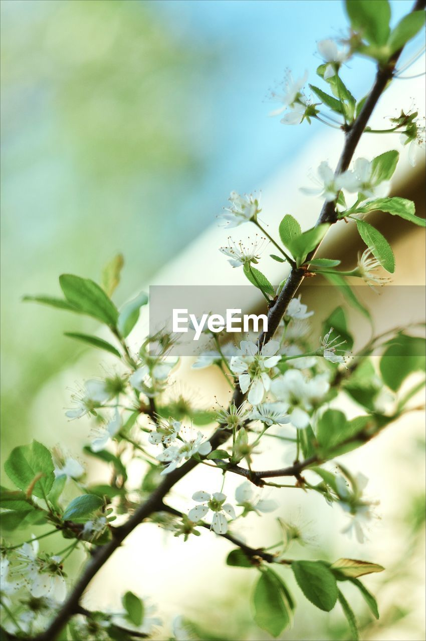 plant, growth, flower, flowering plant, beauty in nature, close-up, nature, leaf, vulnerability, fragility, plant part, no people, selective focus, freshness, day, focus on foreground, tree, outdoors, green color, tranquility