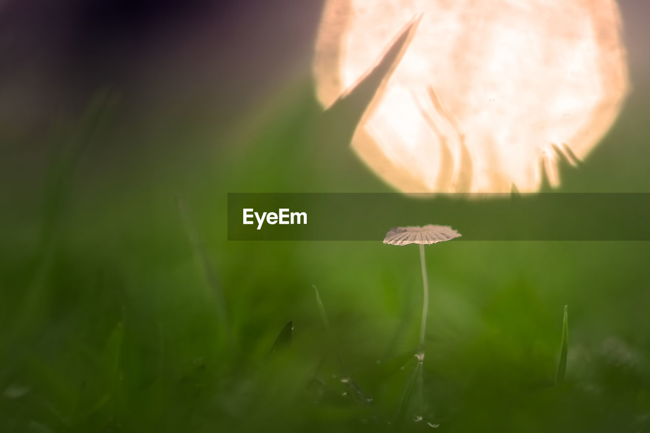 mushroom, growth, fungus, plant, vegetable, beauty in nature, land, close-up, selective focus, nature, no people, food, vulnerability, toadstool, green color, fragility, freshness, field, grass, day, blade of grass