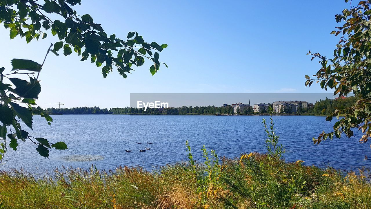 plant, water, tree, sky, growth, nature, beauty in nature, leaf, scenics - nature, plant part, day, no people, lake, tranquility, clear sky, green color, tranquil scene, blue, outdoors
