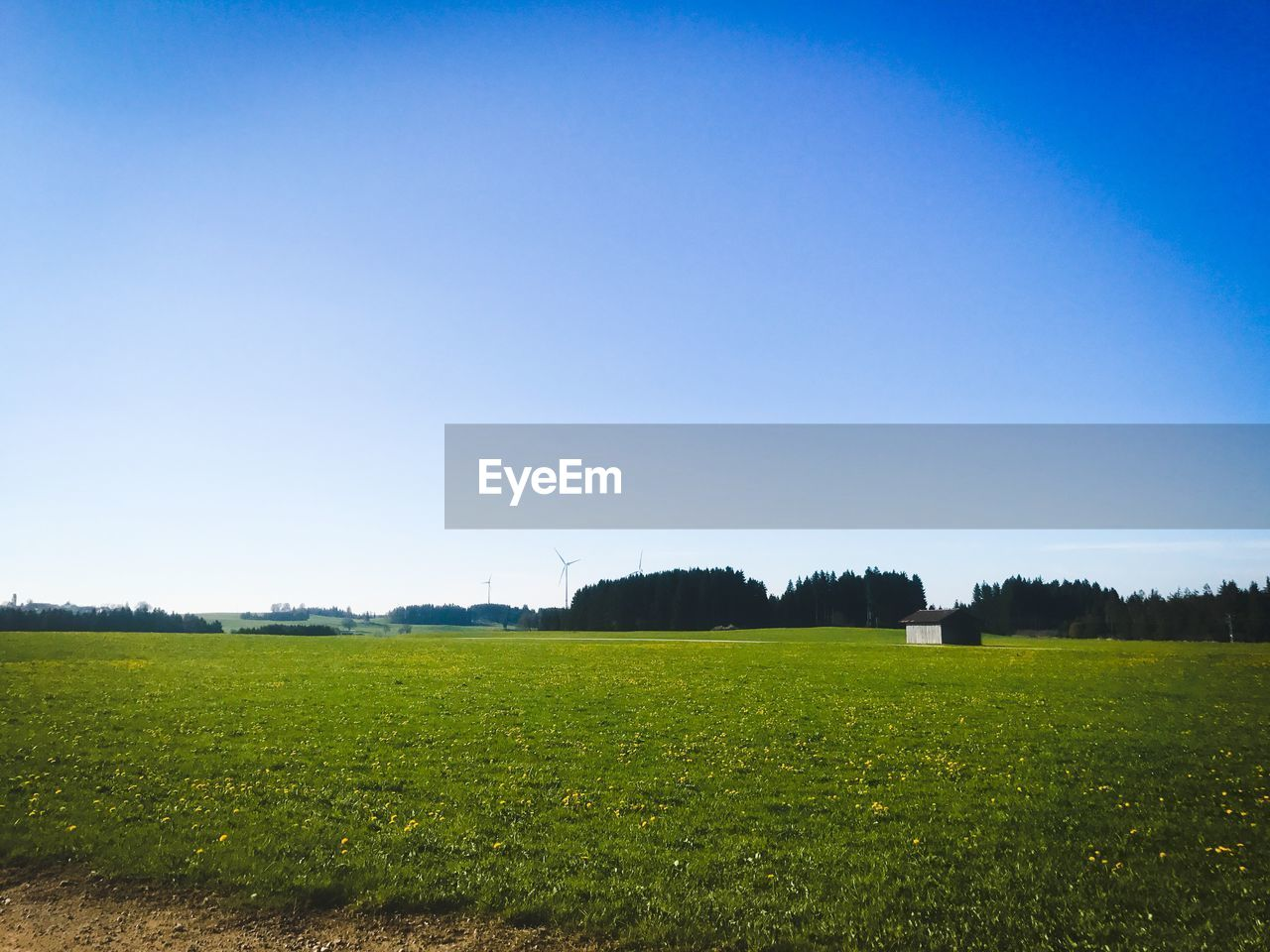 field, landscape, clear sky, tranquil scene, scenics, copy space, nature, agriculture, no people, tranquility, beauty in nature, grass, outdoors, rural scene, blue, tree, day, sky