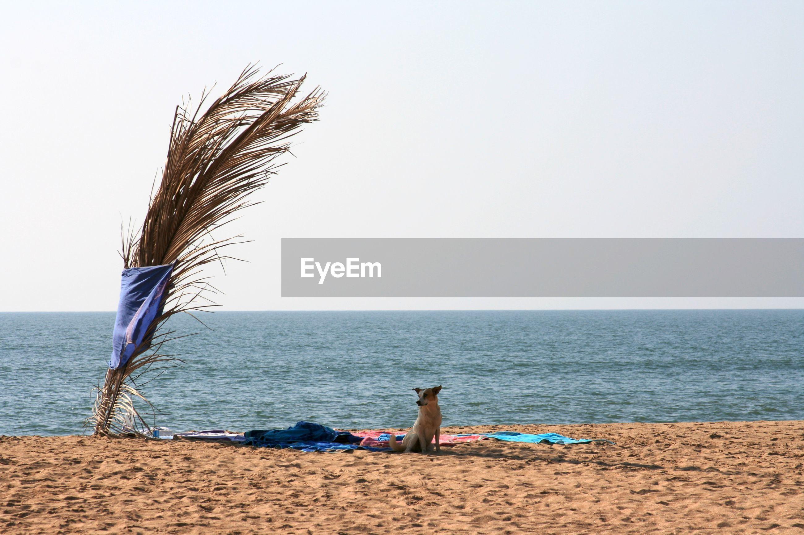 Dog on beach against clear sky