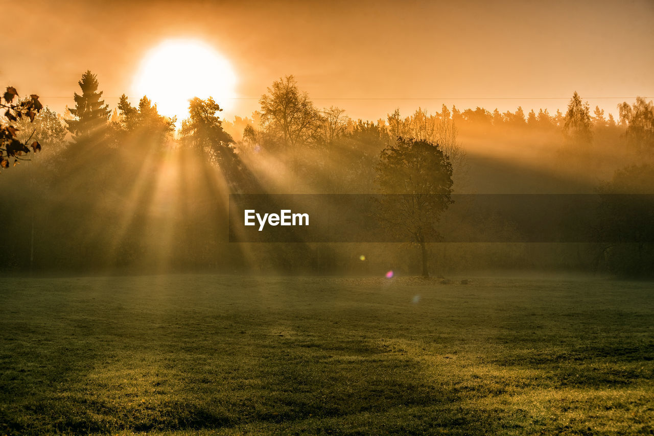 tree, plant, beauty in nature, sunset, sunbeam, sky, sun, sunlight, tranquility, lens flare, scenics - nature, tranquil scene, nature, grass, landscape, no people, environment, growth, fog, outdoors, hazy