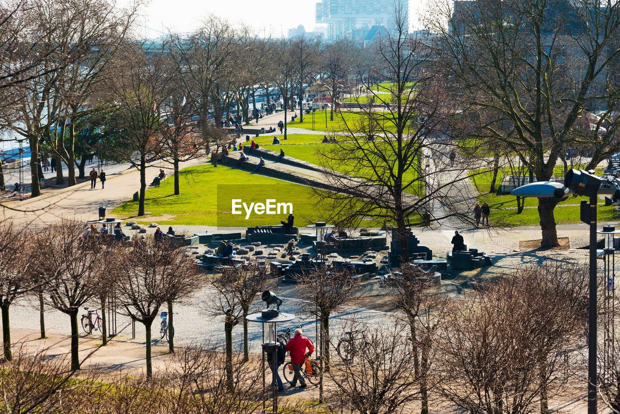 Trees at park