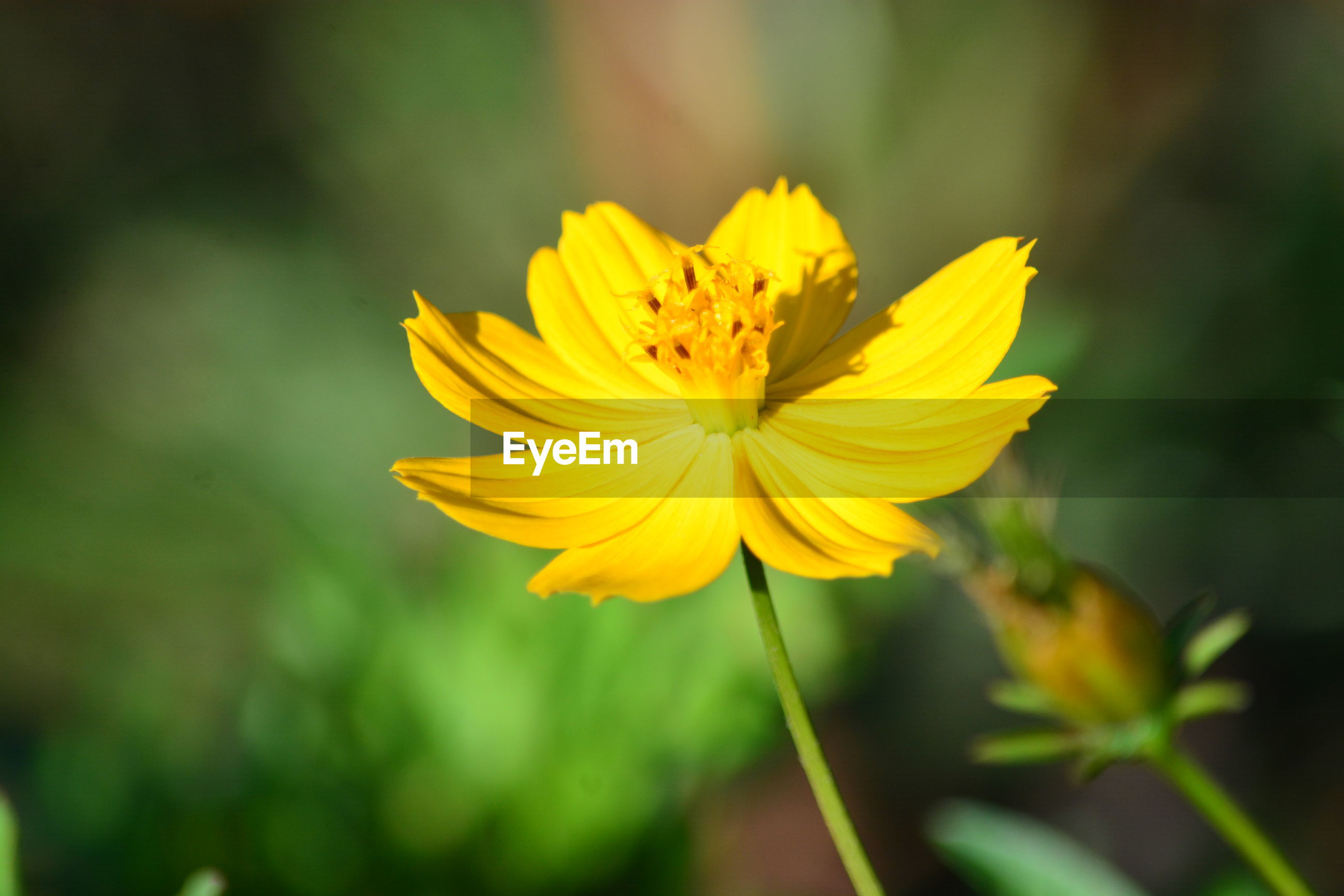 CLOSE-UP OF YELLOW FLOWER PLANT