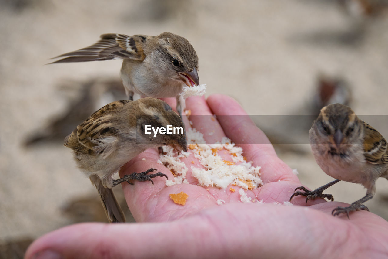 human hand, hand, real people, human body part, vertebrate, one person, animal wildlife, one animal, holding, animals in the wild, feeding, young animal, bird, body part, eating, mammal, young bird, finger, care, human limb