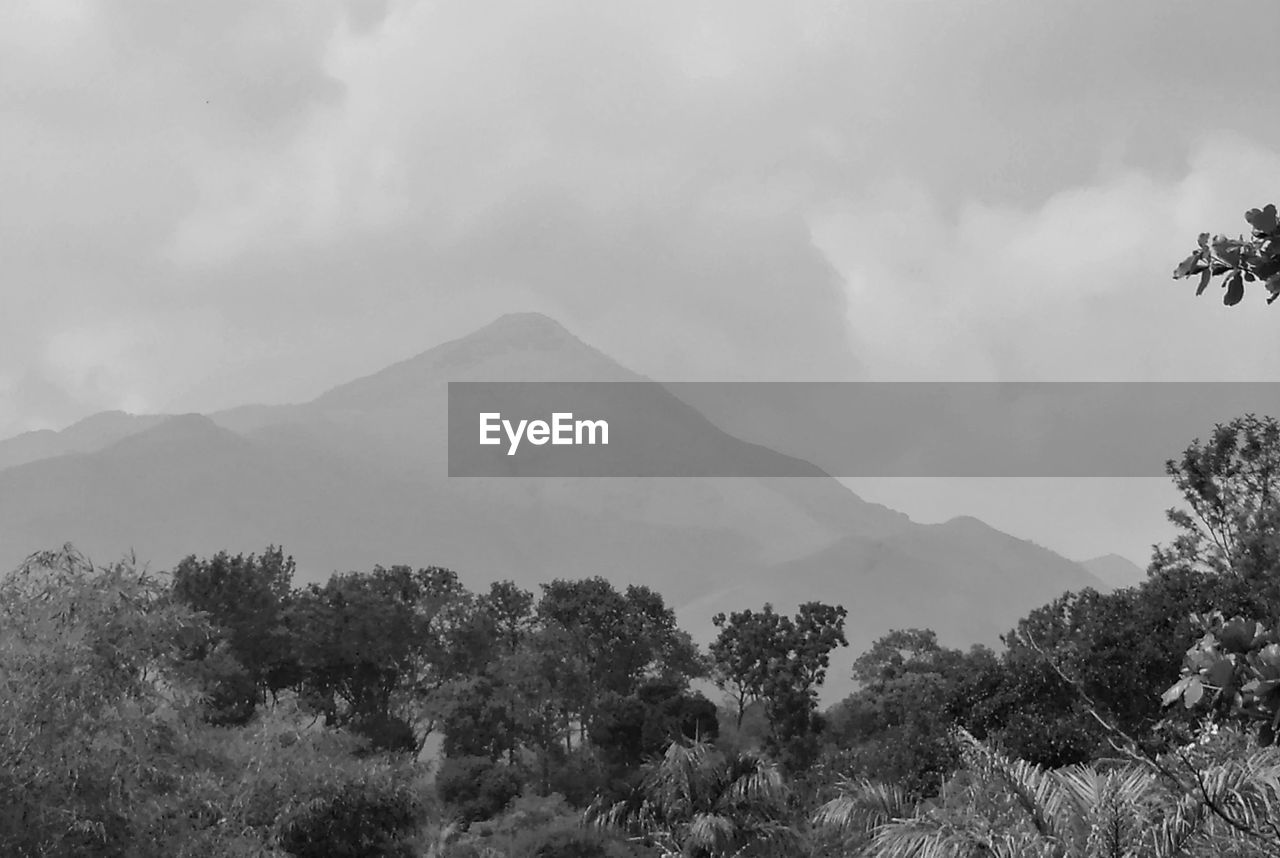 mountain, sky, cloud - sky, beauty in nature, plant, scenics - nature, tranquil scene, tree, tranquility, nature, mountain range, no people, day, environment, non-urban scene, landscape, growth, idyllic, land, outdoors, mountain peak