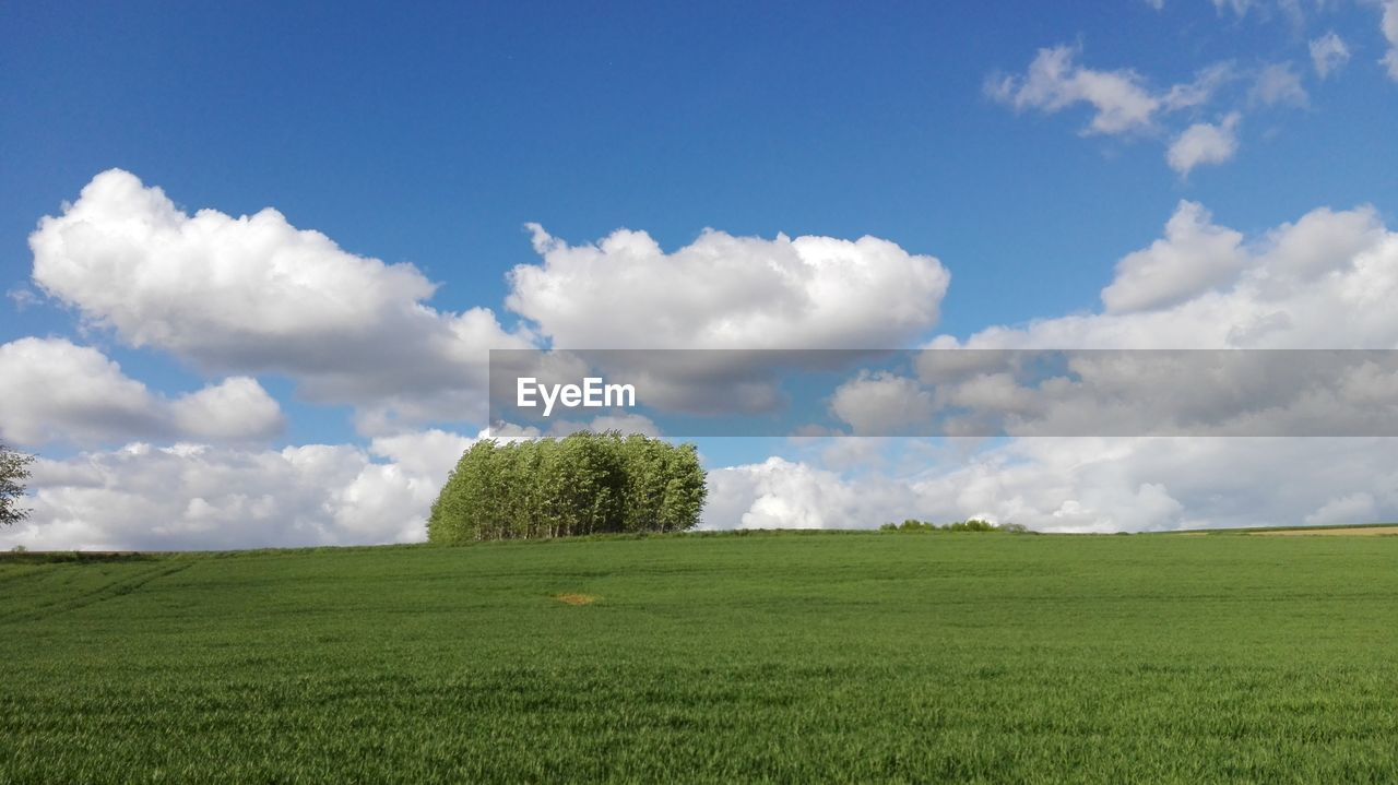 sky, cloud - sky, plant, grass, green color, environment, land, beauty in nature, field, tranquil scene, landscape, tranquility, scenics - nature, nature, day, tree, growth, no people, non-urban scene, idyllic, outdoors