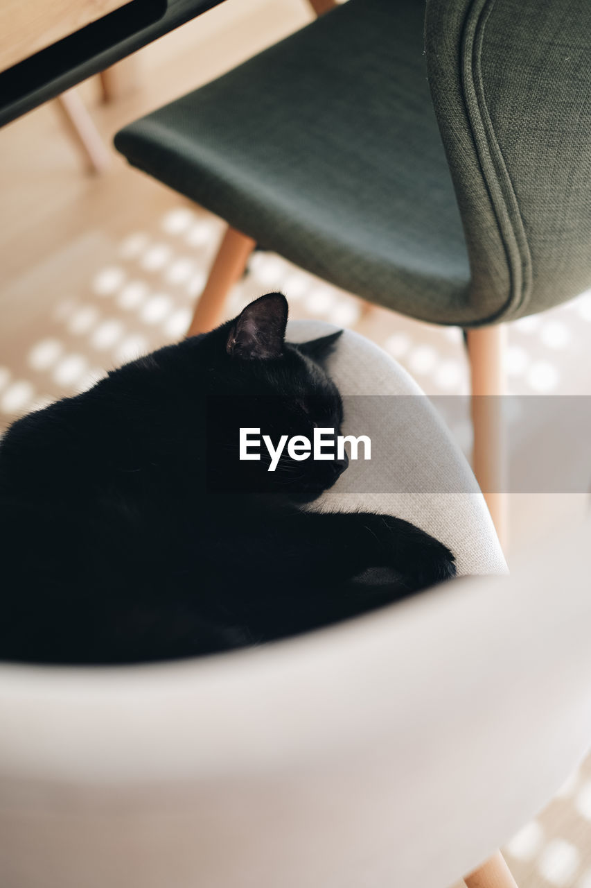 High angle view of cat sleeping on seat at home