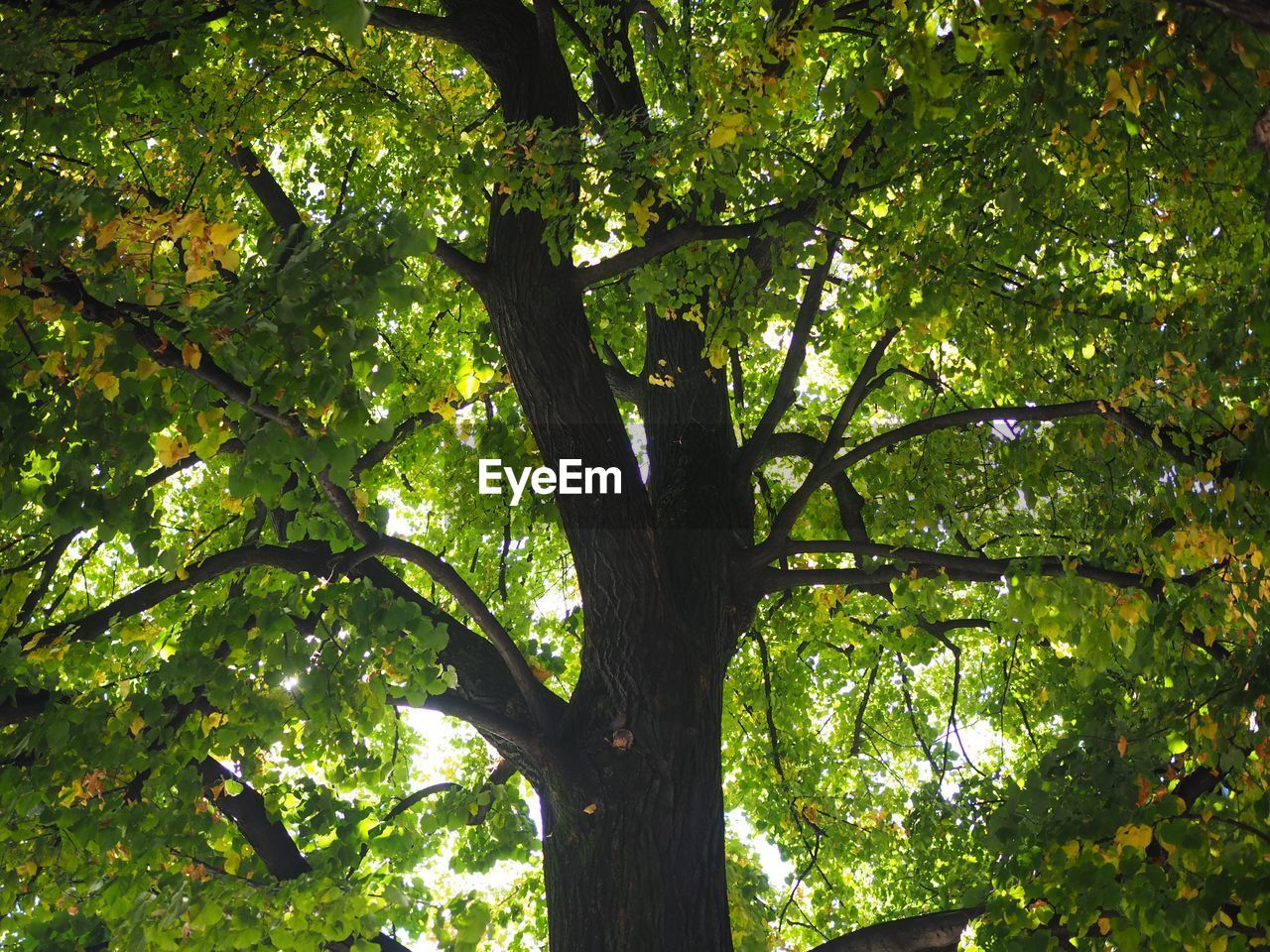 LOW ANGLE VIEW OF TREE IN THE FOREST