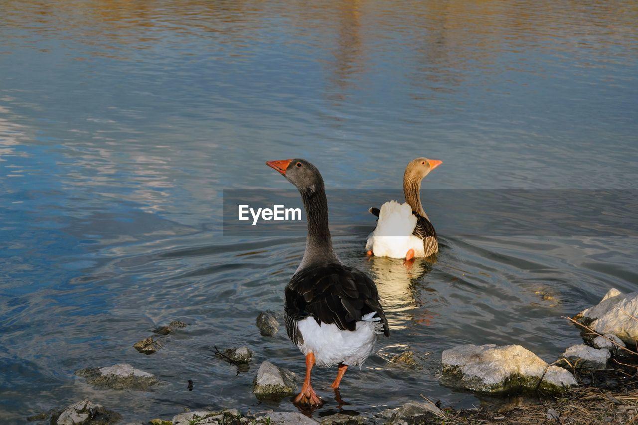 High angle view of ducks on river