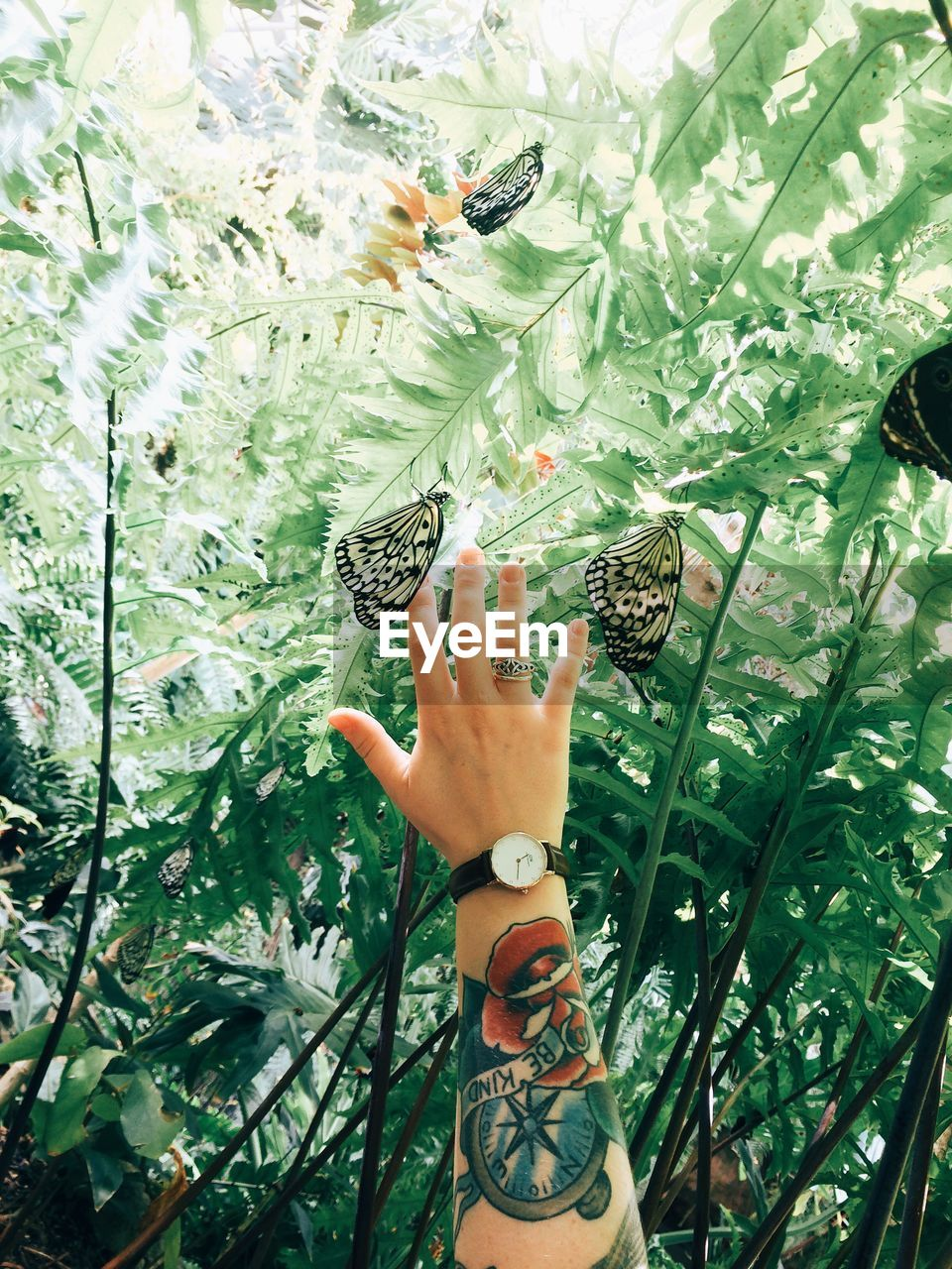 Cropped Image Of Tattooed Woman Hand Amidst Butterflies Against Plants