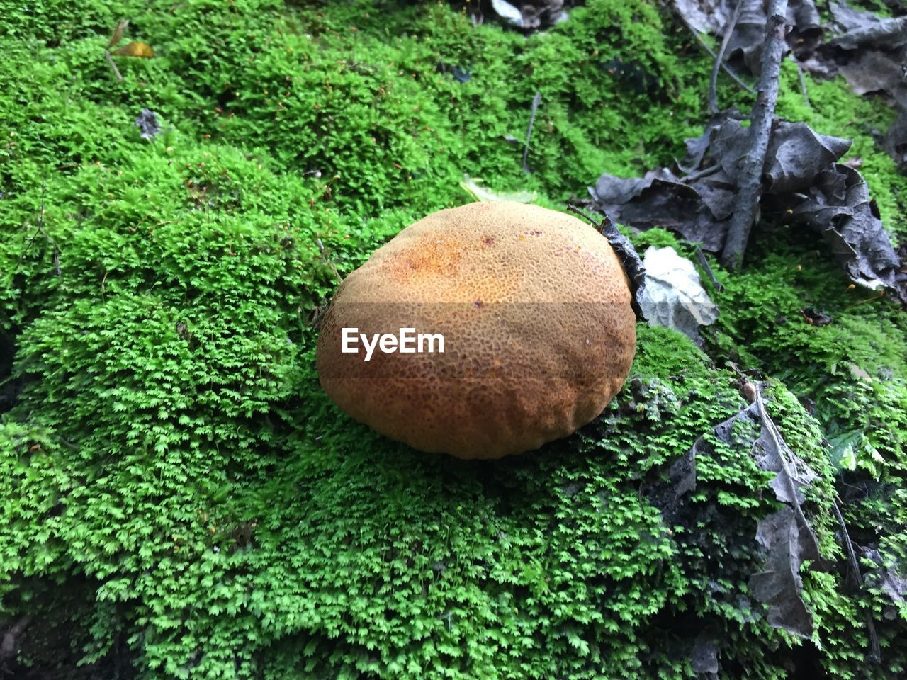 green color, growth, plant, no people, food, food and drink, mushroom, nature, freshness, day, fungus, moss, close-up, vegetable, tree, high angle view, land, healthy eating, outdoors, beauty in nature, toadstool