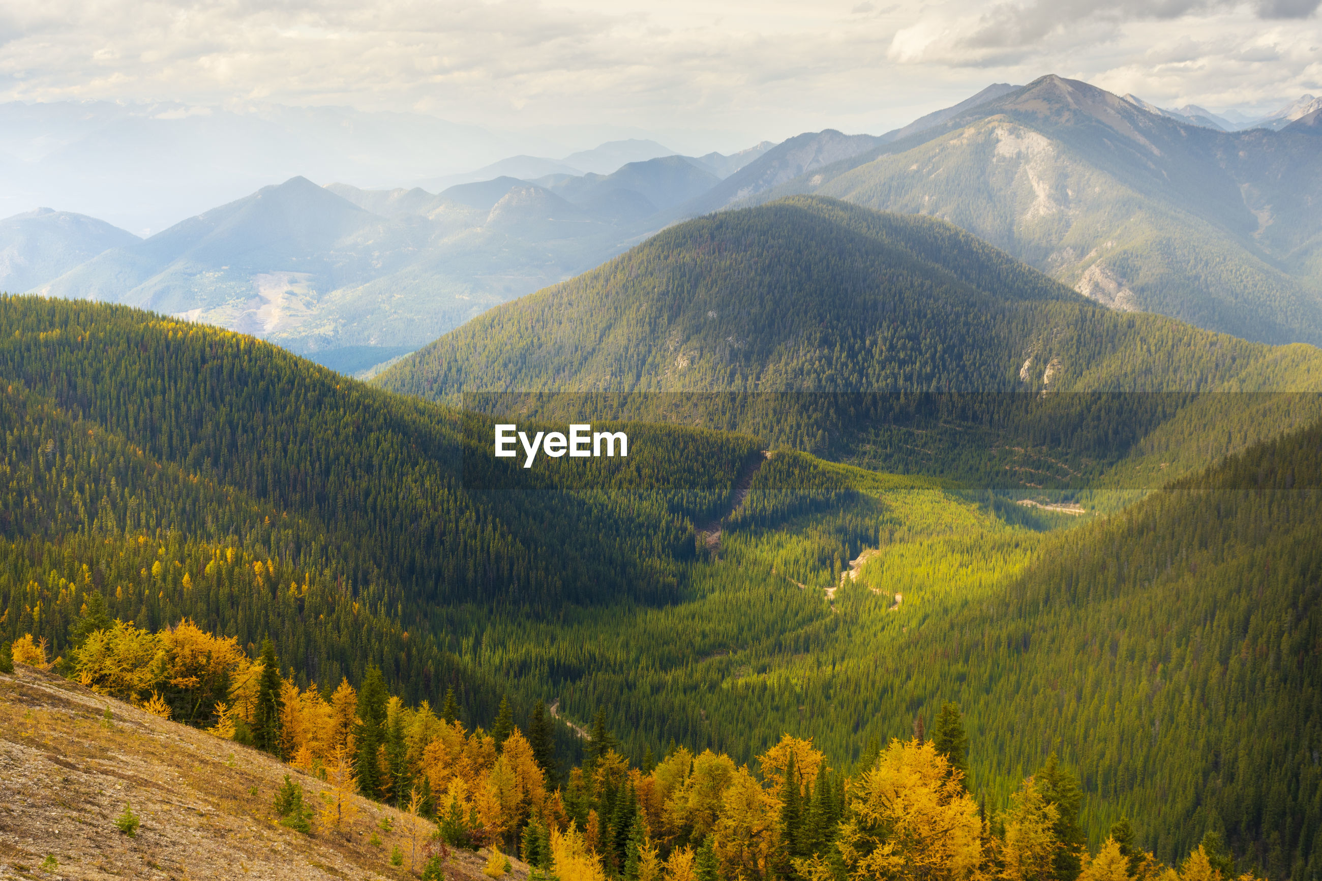SCENIC VIEW OF PINE TREES AGAINST MOUNTAINS