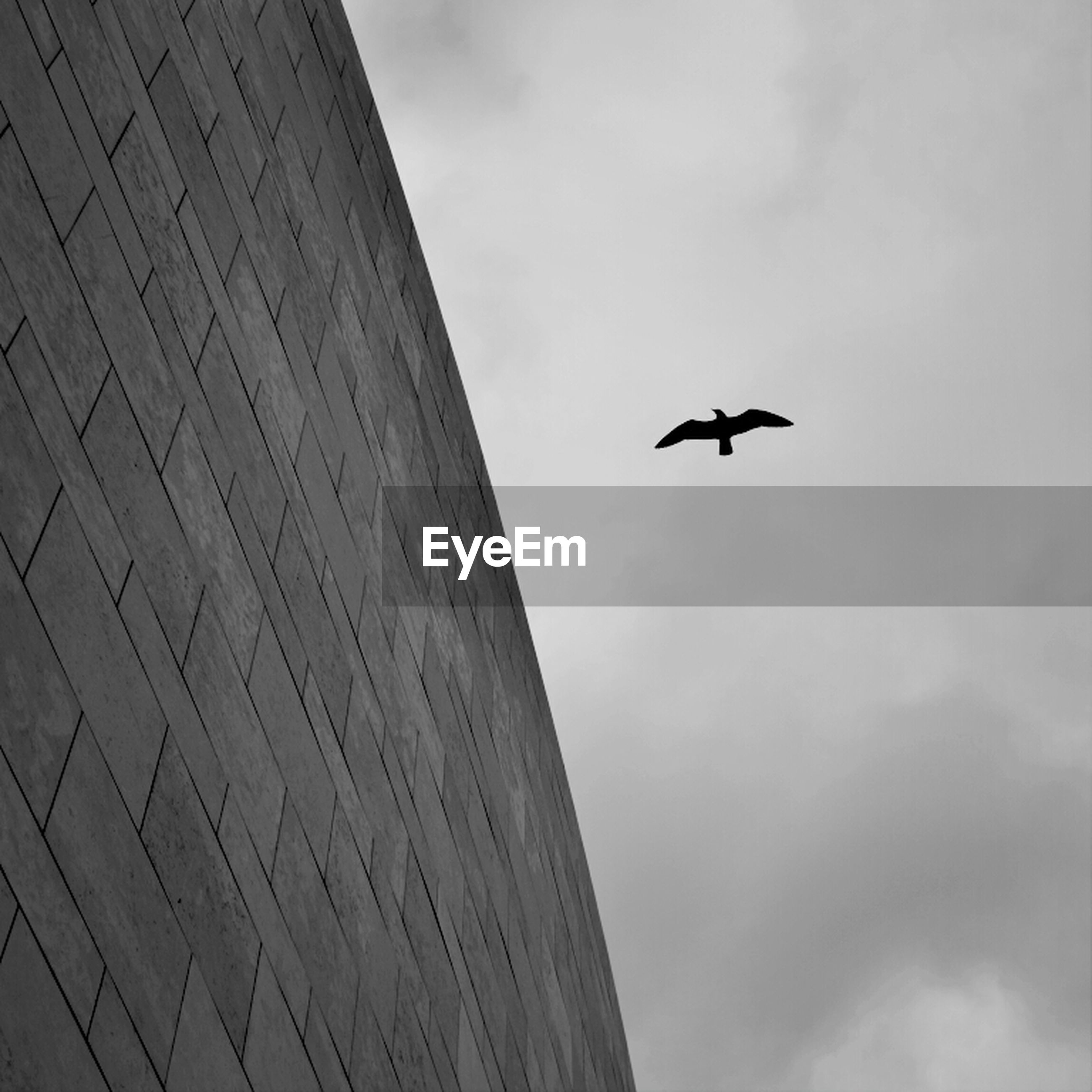 Low angle view of bird by wall against cloudy sky at dusk