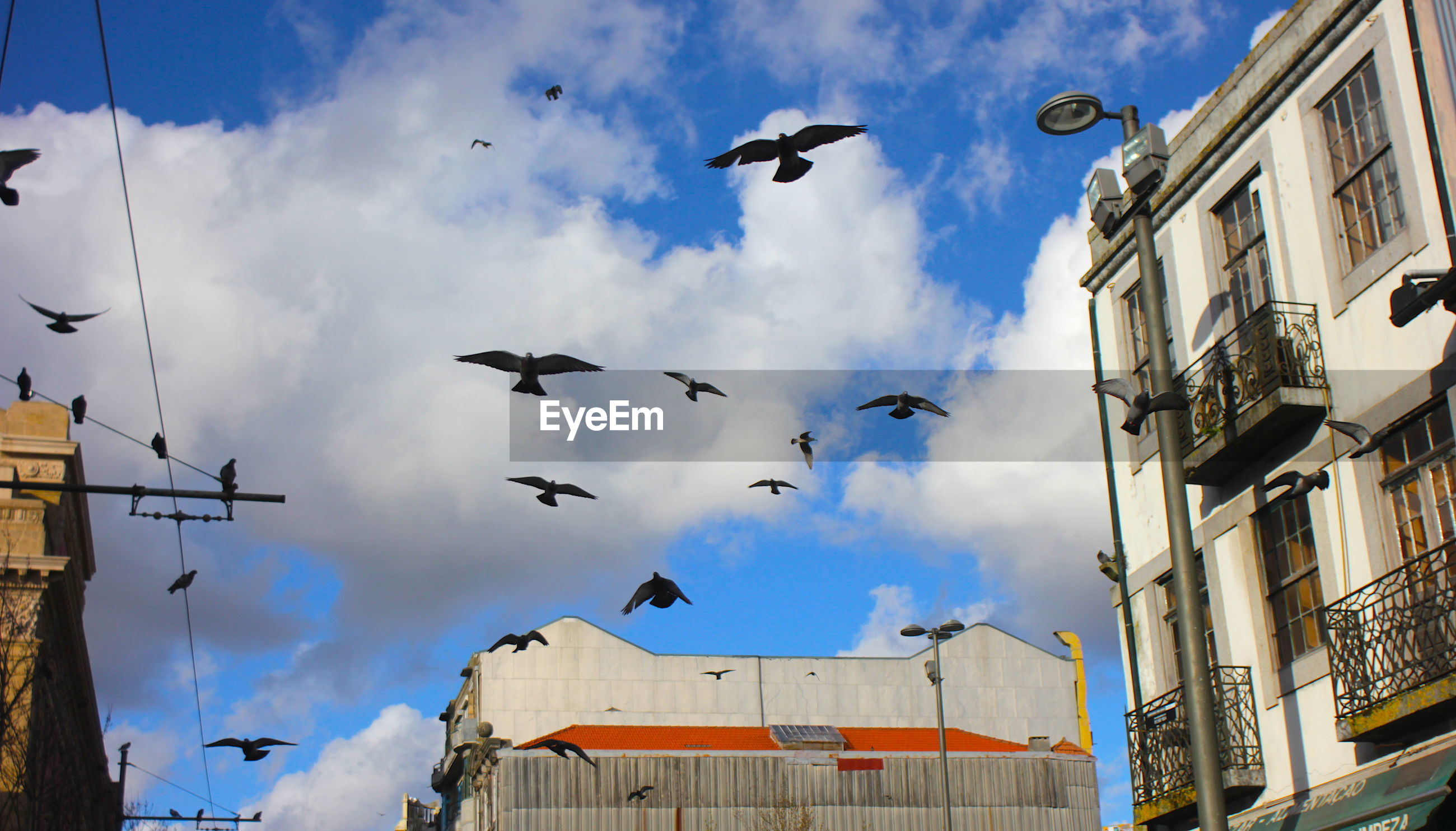 LOW ANGLE VIEW OF BIRDS FLYING IN CITY