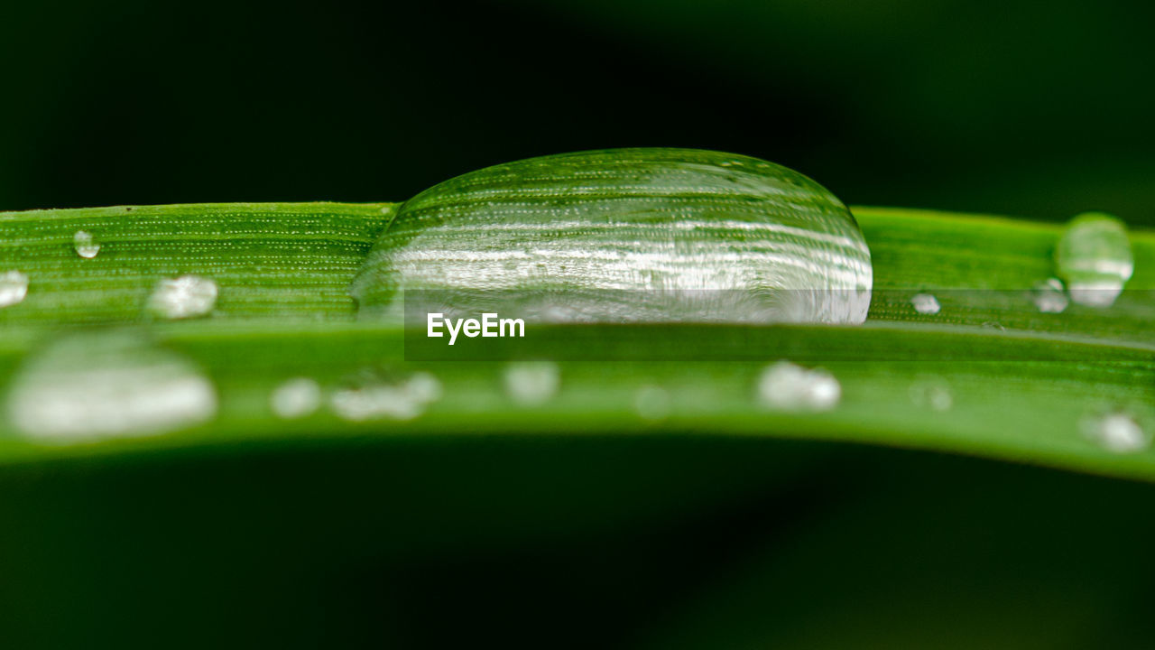 green color, leaf, close-up, nature, no people, drop, water, selective focus, plant, fragility, outdoors, day, freshness, beauty in nature, animal themes