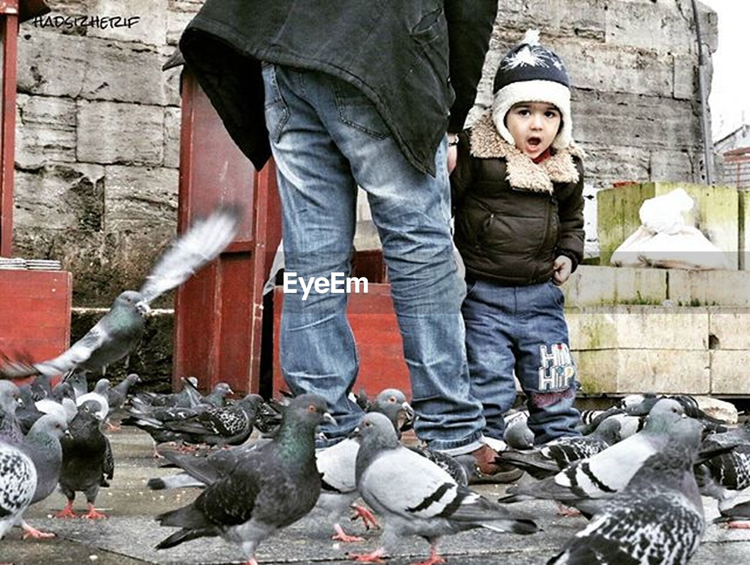 animal themes, bird, animals in the wild, wildlife, pigeon, togetherness, full length, flock of birds, casual clothing, day, medium group of animals, sitting, lifestyles, outdoors, looking at camera, front view, standing, built structure