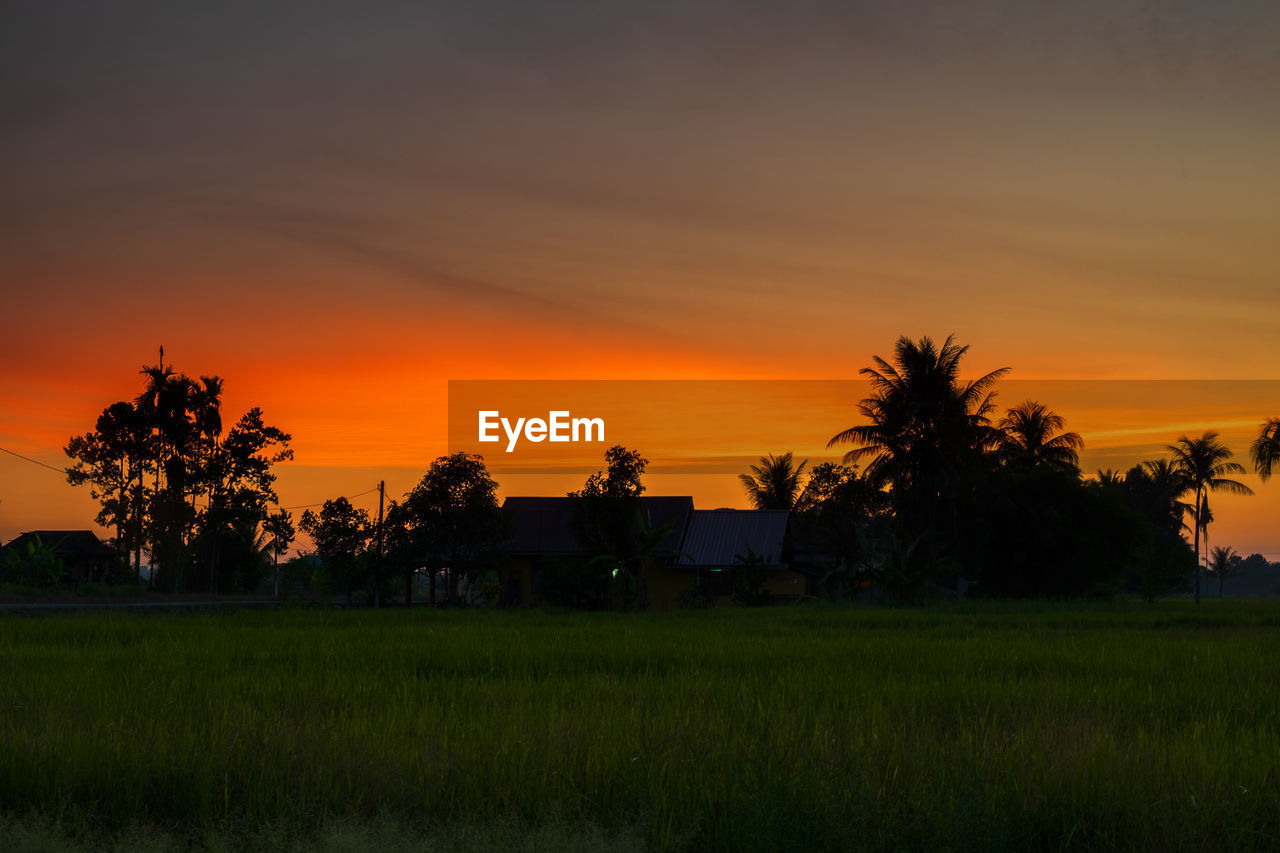 sunset, sky, plant, scenics - nature, beauty in nature, tree, orange color, tranquil scene, tranquility, field, land, landscape, environment, nature, growth, idyllic, grass, palm tree, non-urban scene, green color, no people, outdoors