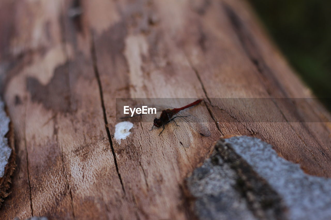 invertebrate, animals in the wild, animal wildlife, insect, animal themes, one animal, animal, selective focus, wood - material, day, close-up, no people, nature, textured, outdoors, zoology, rough, ant, animal wing, arthropod, small