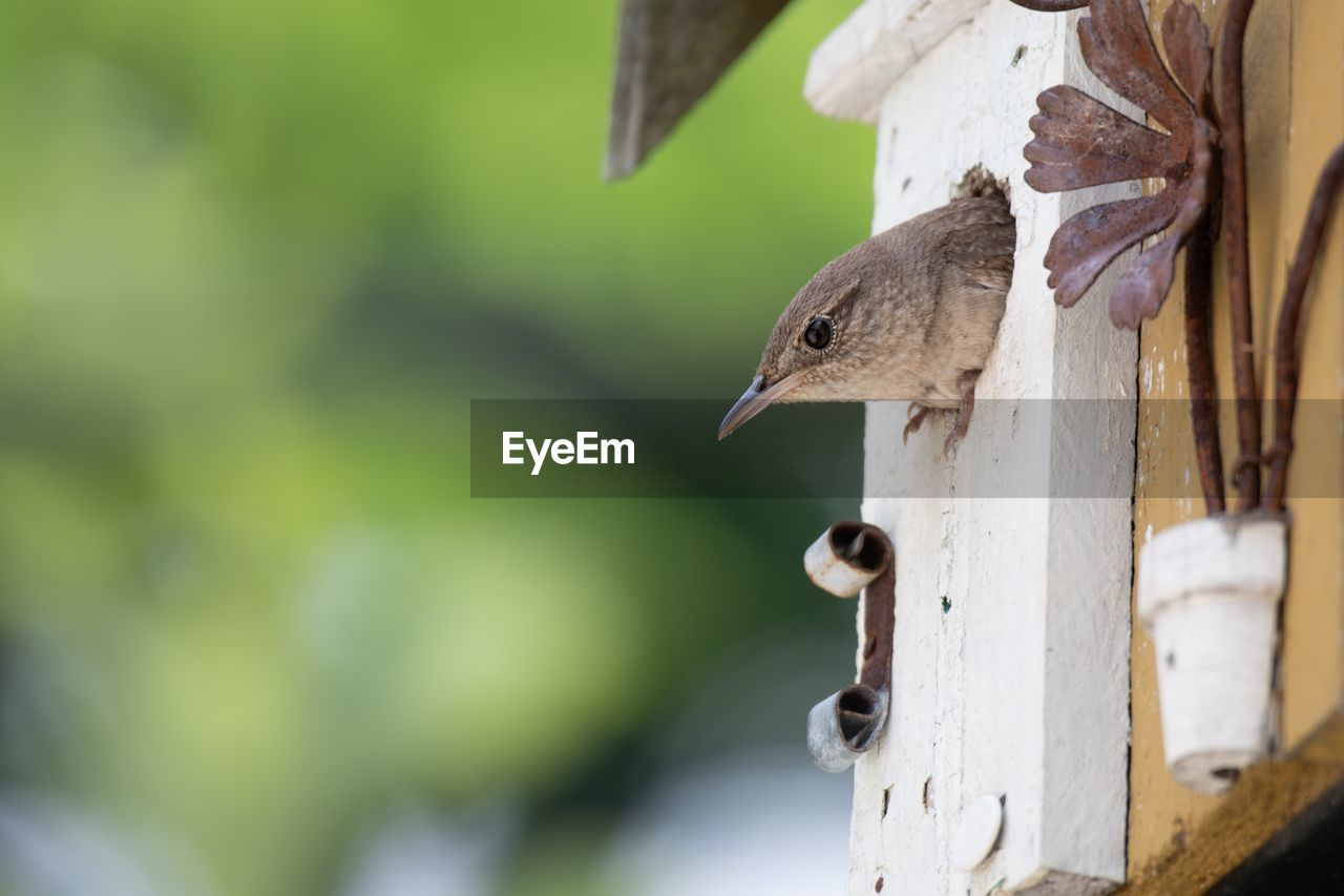 animal themes, animals in the wild, animal wildlife, animal, bird, vertebrate, one animal, focus on foreground, day, close-up, no people, birdhouse, nature, outdoors, selective focus, wood - material, bird feeder, beak, perching, animal head