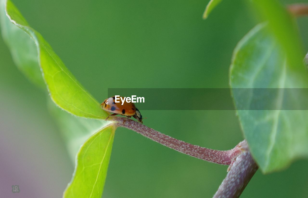 plant part, leaf, animal themes, one animal, animal wildlife, animals in the wild, animal, green color, invertebrate, close-up, plant, insect, nature, no people, day, focus on foreground, growth, selective focus, outdoors, zoology