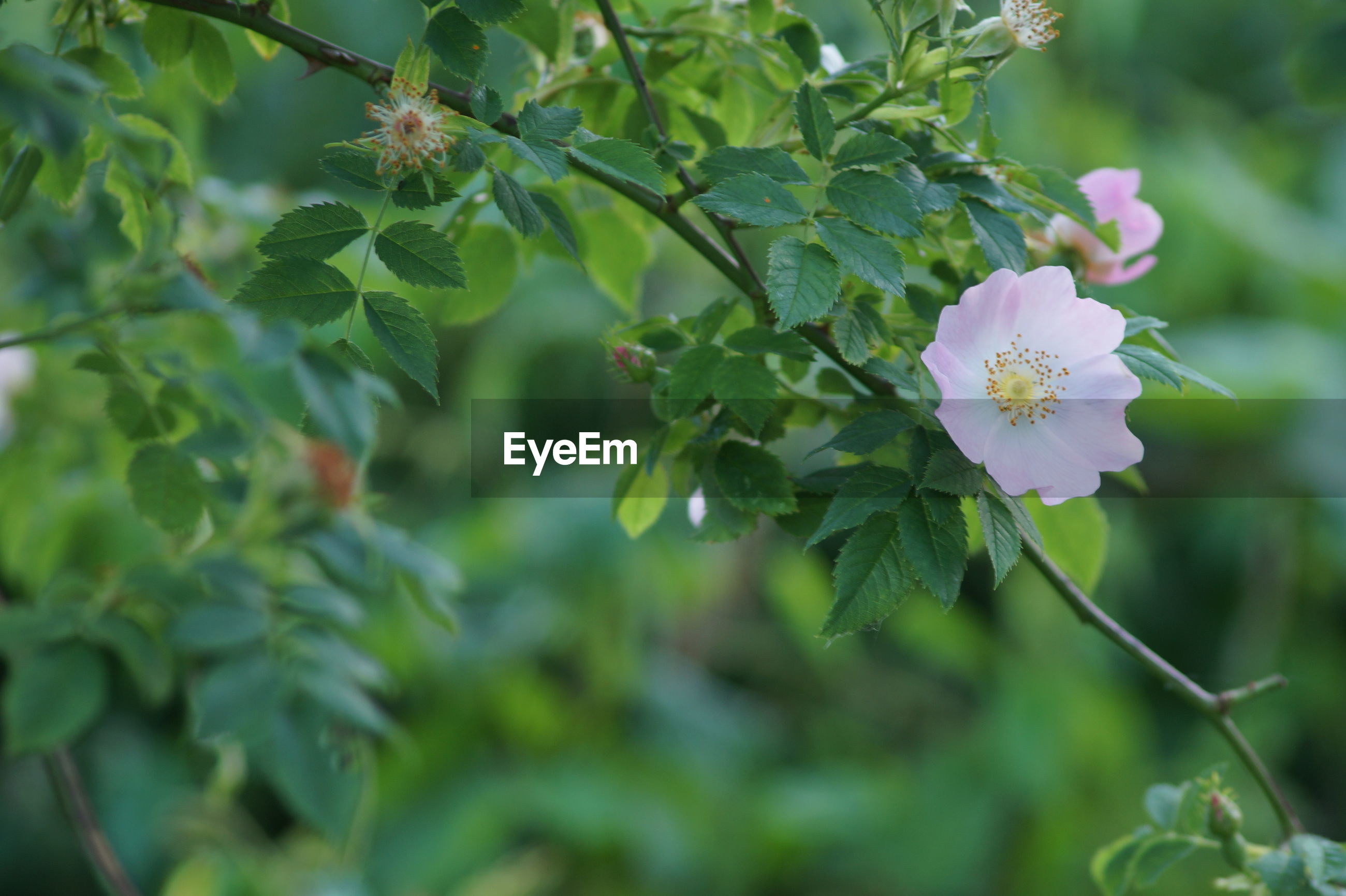 flower, growth, nature, beauty in nature, fragility, green color, petal, leaf, freshness, day, outdoors, no people, plant, focus on foreground, flower head, close-up, blooming